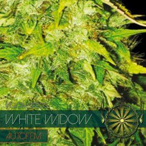 White Widow Autofem (Vision Seeds)
